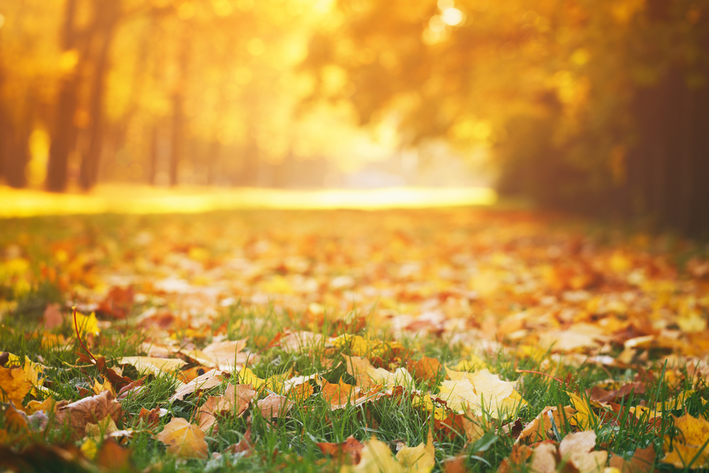 Guidelines for Curbside Collection of Leaves and Other Yard Waste